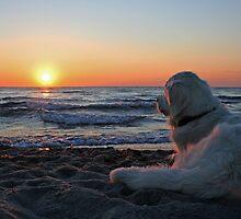 Enjoying the sunset (Denmark) by Trine