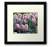 Pink Tulips at Queen Elizabeth Park Framed Print