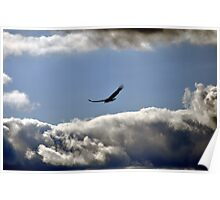 Turkey Vulture in cloudy sky Poster
