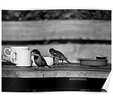 Sparrows at Tea-Time Poster