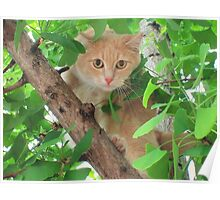 Chedder in GINKO Tree Poster