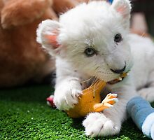 Adorable White Lion Cub by jarodface