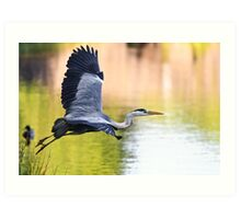 Heron Launch Art Print