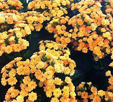 Yellow Flowers by Cezean
