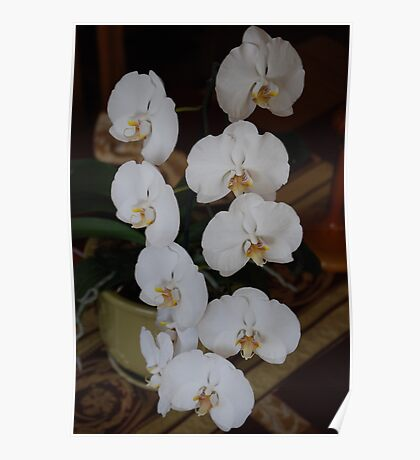 White Orchid II If you like, please purchase, try a cell phone cover thanks Poster