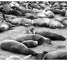 Fur Seals at Cape Cross Photographic Print