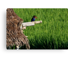 Indonesia 3- Gardian of the rice paddy Canvas Print