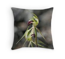 Rigid-combed spider-orchid Throw Pillow