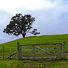 The Lone Fence by Kamalpreet S. Sawhney