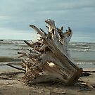 Washed up by Brenda  Parsons