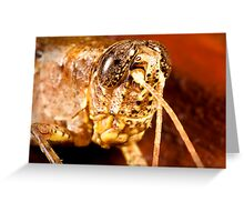 Relaxed Grasshopper Greeting Card
