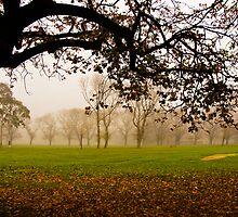 Fawkner Park on a misty morning by Kamalpreet S. Sawhney