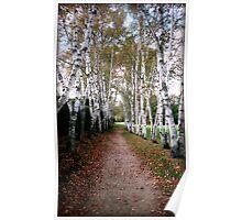 Birch Walk Poster
