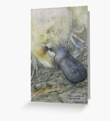 A Glimpse of the Platypus Greeting Card