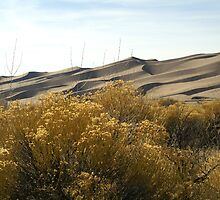 Shadows on the Great Sand Dunes by Bob Spath