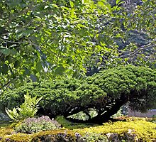 Bonsai  Culture by marchello