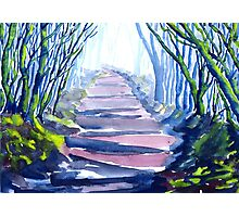 Misty Path Through the Woods Photographic Print