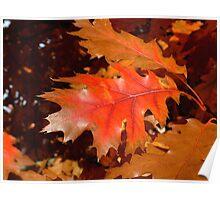 Red Oak Leaf Poster
