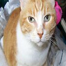 Our Ginger Cat by Terri Chandler