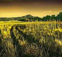 jeep trail through high thistle rogue valley by daledaniel