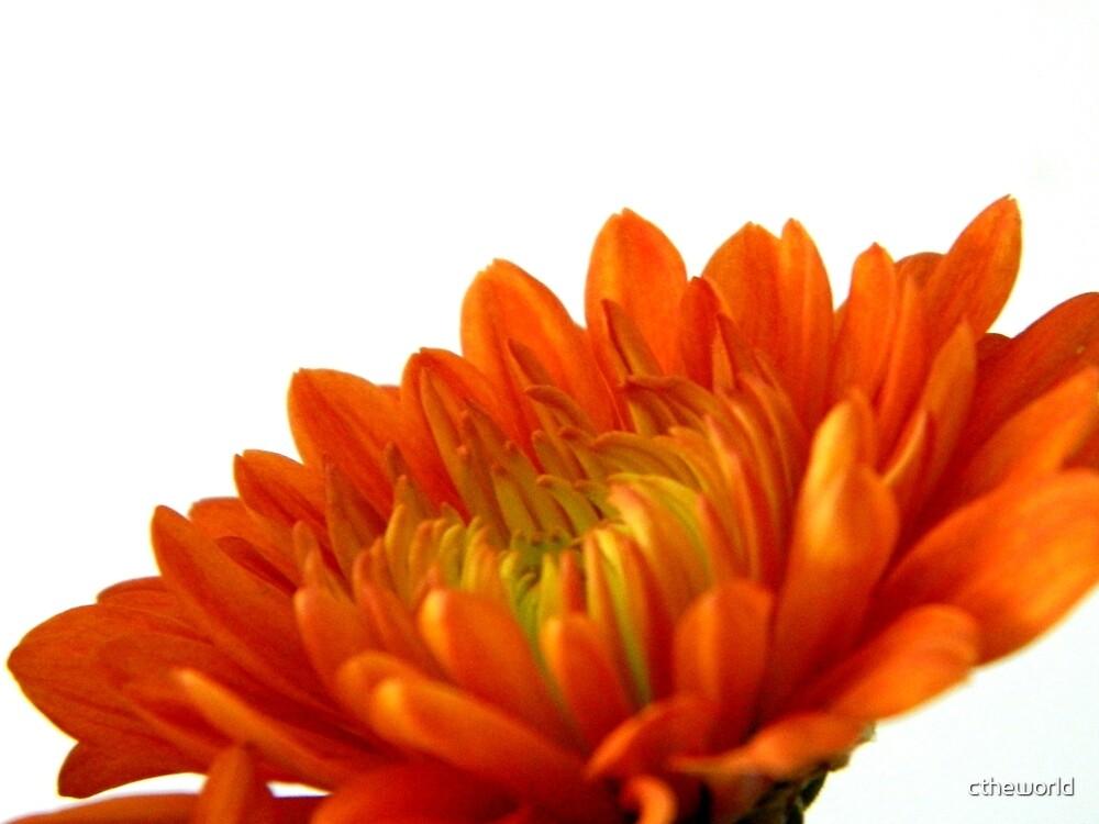 .......orange     ^ by ctheworld