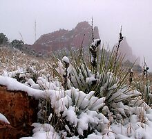Yucca after snowfall in The Garden of the Gods by Bob Spath