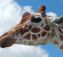 Giraffe with Clouds by Cezean