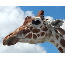 Giraffe with Clouds Photographic Print