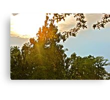 shining through. Canvas Print