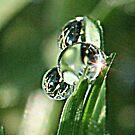 """Dew on a """"Fresh Cut"""" Morning by Catey"""
