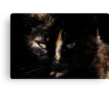 Cat Eyes #1 Canvas Print