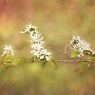 Buds Of May by jules572