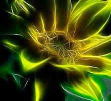 Sunflower by Patriciakb