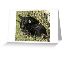 Black Angus Bull Calf Greeting Card