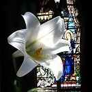 Chapel Lily by picketty