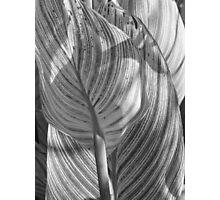 Gray Striped Plant Photographic Print
