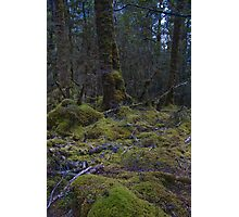 Enchanted Forest 2 Photographic Print