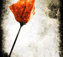 poppy by Di Dowsett