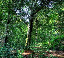 Woodland Scene 1 by Mark Mair