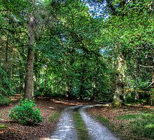 Woodland Road by Mark Mair