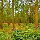 Trees by Trevor Kersley