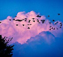 Magenta Dream by Yuri Lev