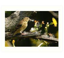 A female American Goldfinch. Art Print