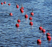 Buoy colony  by Bluesrose