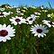 Springtime - fields of flowers