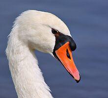 Mute Swan by Teresa Zieba