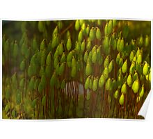 Tiny World Of Moss Poster