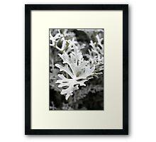 Silver Leaves Framed Print