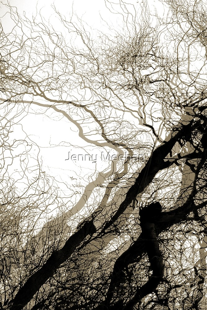Corkscrew Willow by jenny meehan