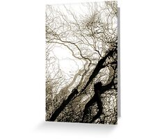 Corkscrew Willow Greeting Card